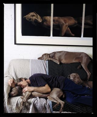 Med_136williamwegman-jpg
