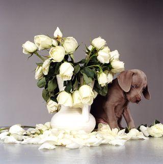 Riddles & Roses, 1999