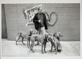 Bill walking dogs